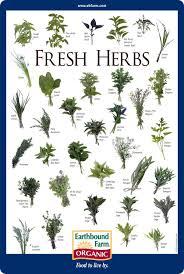 Fresh Herbs Id Chart In 2019 Medicinal Herbs Herbs For