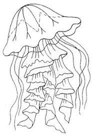 Small Picture jelly fish Coloring pages Jellyfish Scyphozoa jellyfish