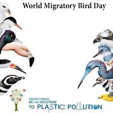 Resources World Migratory Bird Day