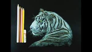Tiger Color Chart White Tiger By Oil Pastels And Color Pencils In Black Chart