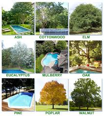 worst trees to plant around a pool