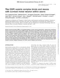 pdf smn requirement for synaptic vesicle active zone and microtubule postnatal organization in motor nerve terminals