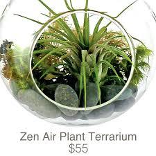 air plant terrarium zen air plant terrarium makerskit diy air plant terrarium kit