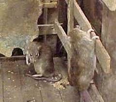 exterminator bronx ny.  Bronx And Exterminator Bronx Ny N