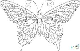 Detailed Butterfly Coloring Pages Jokingartcom