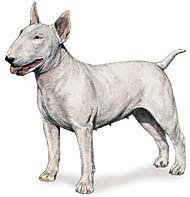 Προβλήματα υγείας του Bull Terrier