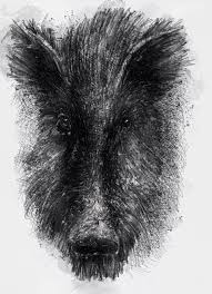 One Of My Sketch A Day Drawings Old Boar Boar Drawing Pig