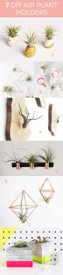Air Plant Display Best 25 Air Plant Display Ideas Only On Pinterest Air Plants