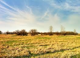 tall grass field sunset. Midewin National Tallgrass Prairie Tall Grass Field Sunset H