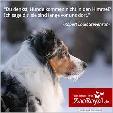 Hunde Sind Einfach Wahre Und Treue Freunde Dogs Doglove