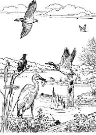 Small Picture Wildlife Coloring Pages 6326 Bestofcoloringcom