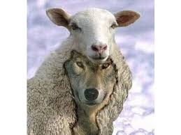 Image result for wolf in sheeps clothing images