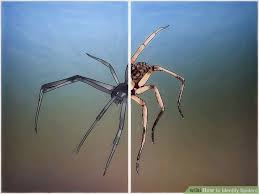 Michigan Spiders Identification Chart 3 Ways To Identify Spiders Wikihow