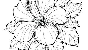 Printable Realistic Flower Coloring Pages Download Them Or Print