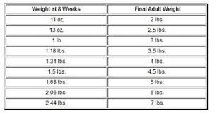 You Will Love Teacup Yorkie Weight Chart Perfect Weight