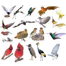 Красная книга России Животные  Список птиц занесённых в Красную книгу России