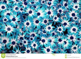 blue flowers background tumblr. Modren Background Blue Flowers Tumblr Background To B