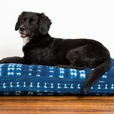 the best dog beds according to dog experts