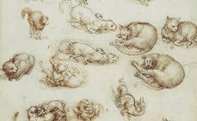 Leonardo Da Vinci Cats Drawings And 6 Quotes