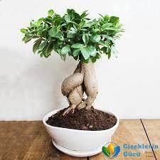 saksı bitki ile ilgili görsel sonucu