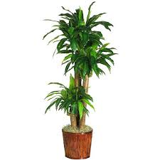 best office plants no sunlight. Luxury Indoor Flowering Plants No Sunlight Or Best To Grow Indoors Without 51 . Office