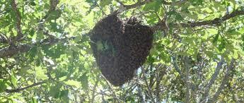 """Résultat de recherche d'images pour """"abeille coeur"""""""
