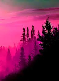 Pink On Black Rome Fontanacountryinn Com
