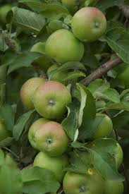UPick Farms Illinois Indiana Michigan And Wisconsin  Chicago What Fruit Trees Grow In Michigan
