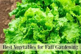 Fall Gardening  Backyard Updates  Diana ElizabethFall Gardening