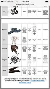 Pest Dropping Identification Chart 30 Best Wildlife And Nature Images In 2017 Bees Gardens