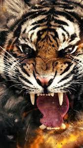 Live Wallpaper Iphone Tiger