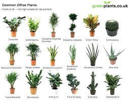 low maintenance office plants. Best Low Light Office Plants Maintenance Delightful Design Fluorescent I