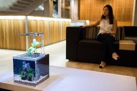 Amazon.com : EcoQubeC Aquarium - Desktop Betta Fish Tank For Living Office  And Home Dcor : Amazon Launchpad