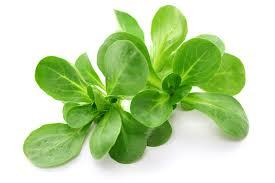 Roszponka należy do grupy małokalorycznych warzyw.