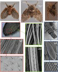 how drain flies manage to almost never