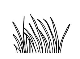 Small Picture Long Grass Coloring Pages Color Luna