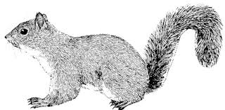 Small Picture Squirrel Drawing Coloring Page