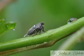 Ils peuvent mesurer jusqu'à 9 cm de long, ce qui est vraiment remarquable pour un insecte! Macro D Insectes Droles De Betes 2 Les Jardins De Malorie