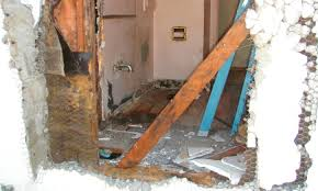 Image result for Termite Treatment Companies Santa Clara County Options To Consider