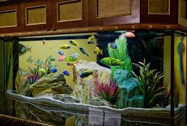 Aquarium Design Group - A Vibrant, Colrful Freshwater Aquarium Scene