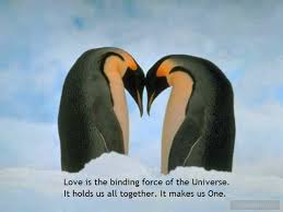 Penguin Love Quotes New Penguin Love Quotes Free Best Quotes Everydays