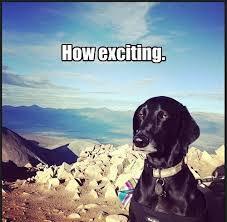 I'm Entirely Thrilled... | I Haz A Funny: Meme Edition | Pinterest ... via Relatably.com