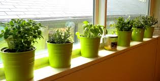 Hanging Kitchen Herb Garden Furniture Stunning Images About Indoor Kitchen Herb Garden Ideas