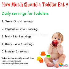 How Much Should A Toddler Eat My Little Moppet