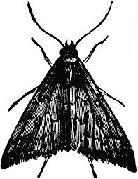 Image result for moth clipart