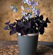small purple flower house plant indoor small house decorating