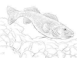 Small Picture Walleye Fish coloring page Free Printable Coloring Pages