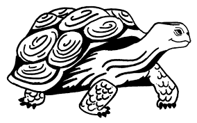 Small Picture Adult free turtle coloring pages Ninja Turtle Coloring Page Free