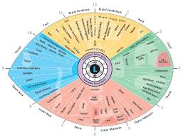 Bernard Jensen Iridology Chart Pdf Iridology Chart Pdf Free Download Iriscope Iridology