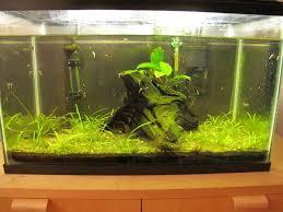 blanket weed aquarium